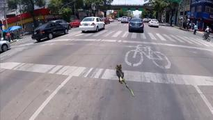 Video: even de hond uitlaten!