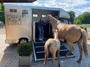 huur transport 2 paarden klein rijbewijs B 150€